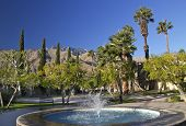 picture of washingtonia  - Fan Palms Trees Blue Fountain Palm Springs California washingtonia filifera - JPG