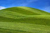 Grama verde (golfe)