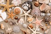 foto of sanddollar  - Seashell background - JPG