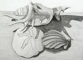 picture of sanddollar  - Pencil drawing of seashells on beach sand - JPG