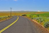 Road in the rolling hills