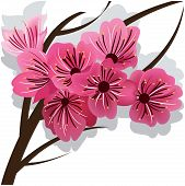 Branch of blooming cherry tree Sakura. Vector illustration.
