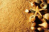 conchas na areia