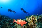 Crescent-tailed Bigeye fish and Scuba Divers