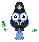 picture of truncheon  - Comical bird policeman sat on a branch isolated on white background - JPG