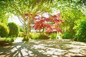 Garden Shade