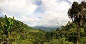 Vista de la selva