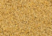 Rice Chaff Background