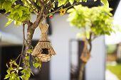 Casas del pájaro colgando en el árbol