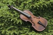 Vintage Violin On A Pine Tree