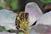 Bee Sucks Flower