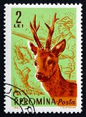 Postage Stamp Romania 1961 Roebuck And Hunter