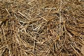stock photo of hayride  - A closeup of a bale of hay from a nearby farmer - JPG