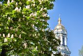 Kiev Pechersk Lavra Monastery And Chesnut Tree In Blossom