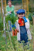 Gardening, harvest, cultivation -  girl with bunch of carrots in vegetable garden