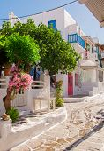 Beautiful Trees And Flowers In The Streets Of The Greek Islands