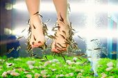 image of pedicure  - fish pedicure spa treatment rufa garra fish - JPG