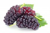 stock photo of mulberry  - Group of mulberries with a leaves - JPG