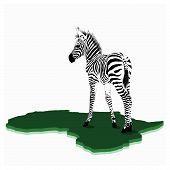 African Baby zebra illustration
