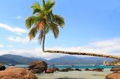 Palm Tree On Beach Aventueiro, Ilha Grande, Brazil