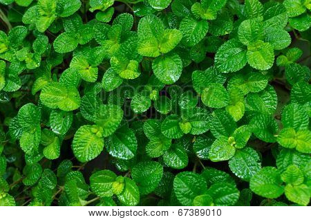Green Leaves Background In The Forest poster