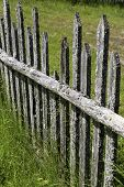 An old weathered wooden fence.