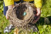 A child holding a bird's nest with a single robins egg.