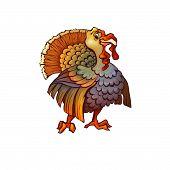 Vector illustration of turkey in cartoon style