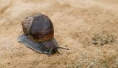 Snail, Slow Motion