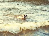 Dog Swimming In Sea Done With A Retro Vintage Instagram Filter.