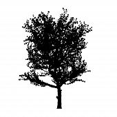 red apple tree silhouette