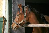 Stallion portrait at the corral door