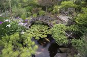 stock photo of dwarf  - A secluded koi pond surrounded by Japanese irises and a variety of dwarf evergreens in a private backyard provide a quiet place to retreat from the pressures of life - JPG