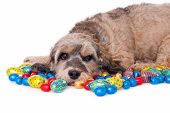 Dog with Easter eggs