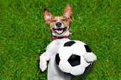 stock photo of laugh out loud  - soccer dog holding a ball and laughing out loud - JPG