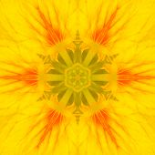 pic of kaleidoscope  - Yellow Mandala Concentric Wild Flower Kaleidoscope Center - JPG