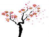 pintura China de sakura