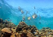 Shoal of fish on a coral reef