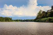 Large jungle river