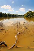 Muddy jungle River