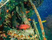 picture of grouper  - Coral Grouper and glassfish around an underwater wreck - JPG