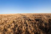 Wildlife Animal Habitat Africa Grasslands