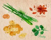 Spices herbs watercolor star anise, parsley, spring onion, ginger root kraft