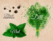 Spices herbs watercolor black pepper, mint, dill kraft