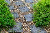 Garden In Rainy Season