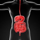 stock photo of endoscopy  - The human digestive system  - JPG