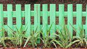 Green garden fence