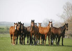 foto of feeding horse  - Beautiful herd of thoroughbred horses in pasture - JPG
