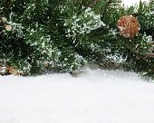 Christmas tree branches nestled in snow