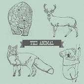 Bear, Deer, Red Fox, And Koala line drawing